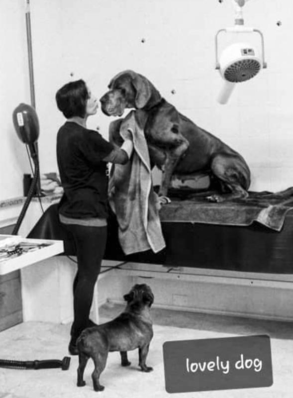 La Storia di Lovely Dog