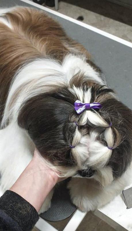 LOVELY DOG toelettatura
